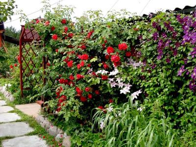 Миксбордеры с розами
