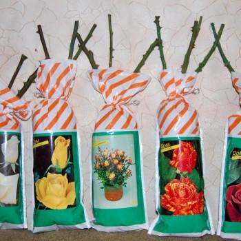 Розы с корневой системой в упаковке