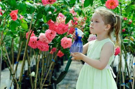 Правила ухода за розами