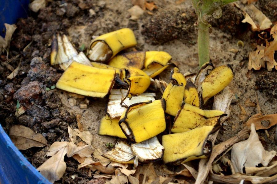 Банановая кожура для удобрения роз