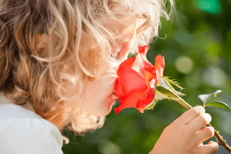 как подобрать розы по запаху