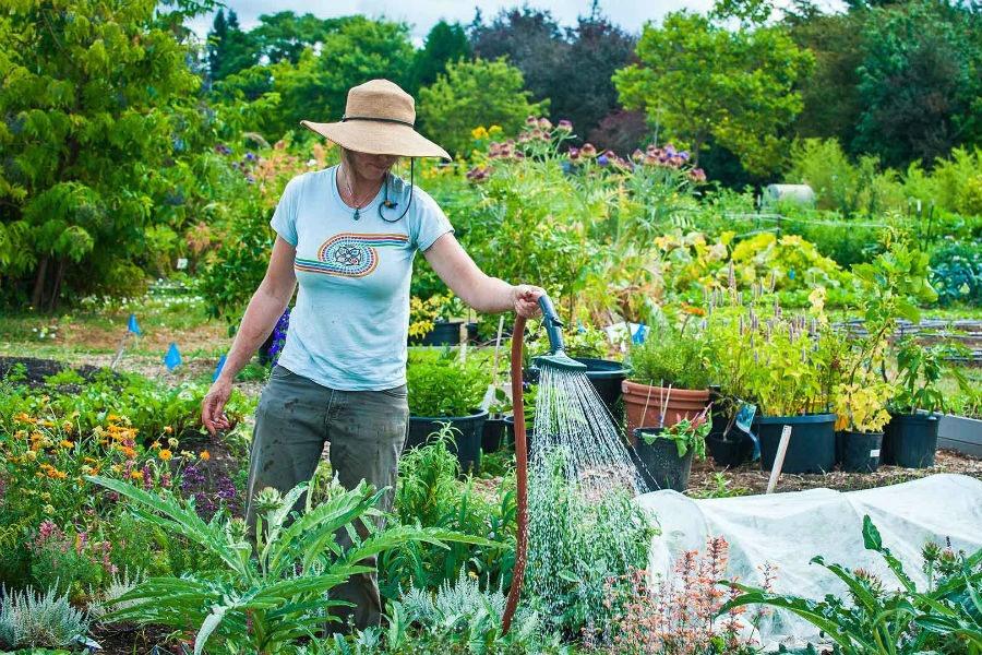 что следует делать в саду в августе